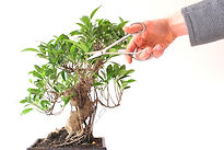 bonsai pruning stock.jpeg