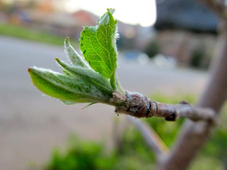 Bitkilerde Enerji: Nasıl Kazanılır, Nasıl Kullanılır?