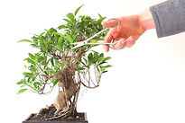 bonsai%20pruning%20stock_edited.jpg