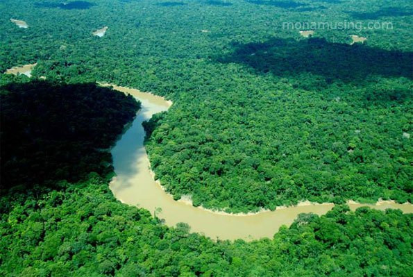 aerial view of vast green tropical forest with a river winding through in the Peruvian Amazon