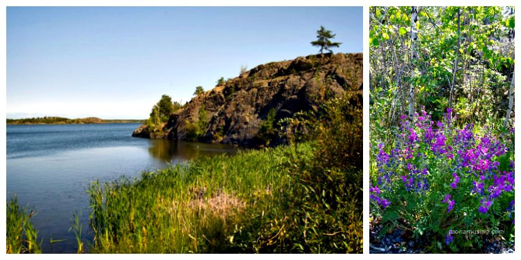 landscape and flowers along Frame Lake Trail in Yellowknife