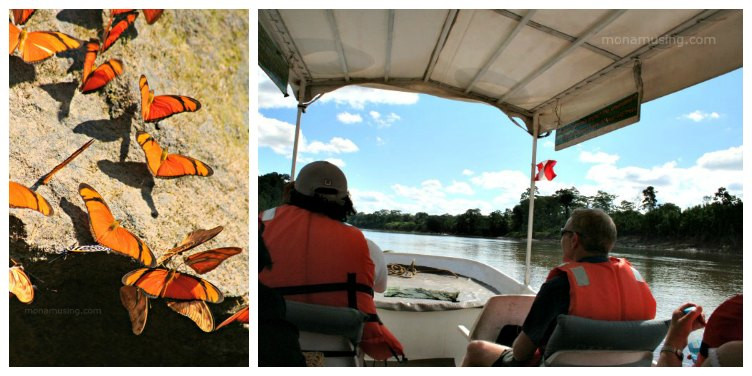 a group of orange butterflies on a rock and passengers riding in a covered motorboat on a river in the Amazon