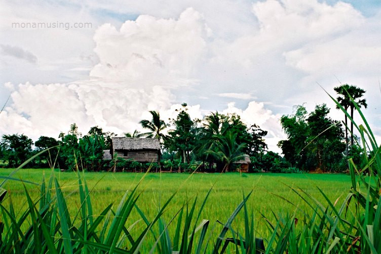 rice paddies and thatch-roofed homes on stilts in Cambodia