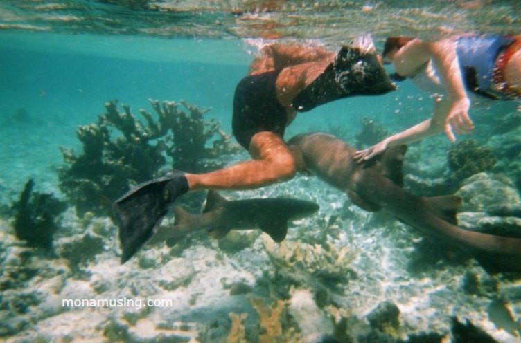 petting a shark while snorkeling near Caye Caulker, Belize
