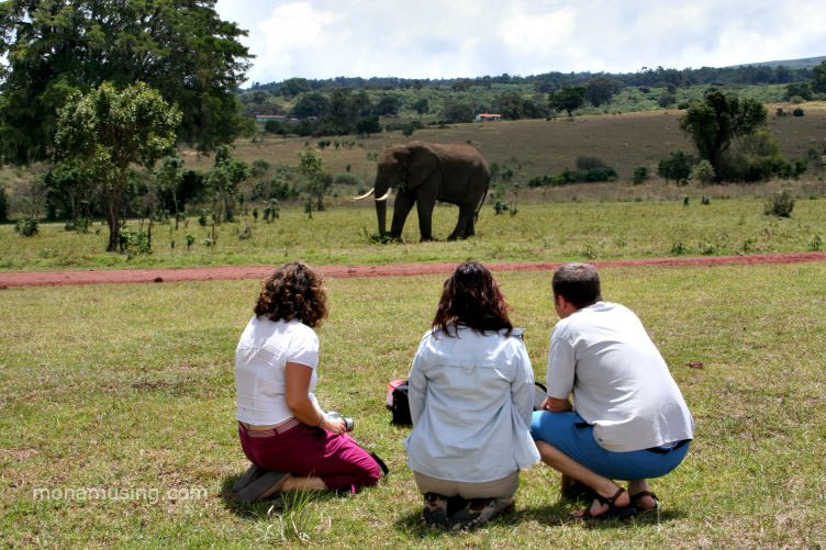 an elephant walks by our picnic spot at the rim of Ngorogoro Crater in Tanzania