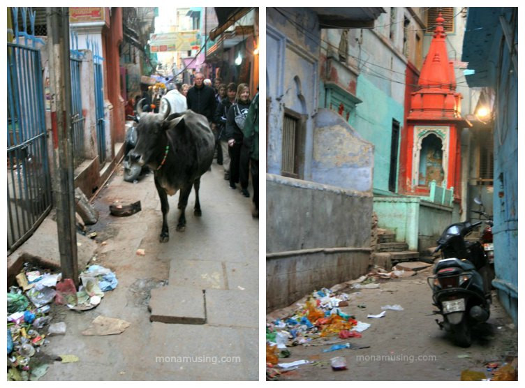 stray cow, garbage and a motorcyle parked on the streets of Varanasi