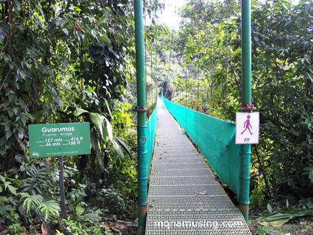 Costa Rica: The hummingbird affairs
