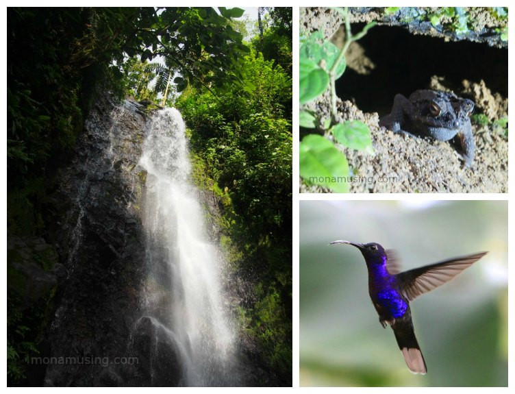 Images from a hanging bridges canopy tour in Costa Rica -- hummingbird, toad and waterfall
