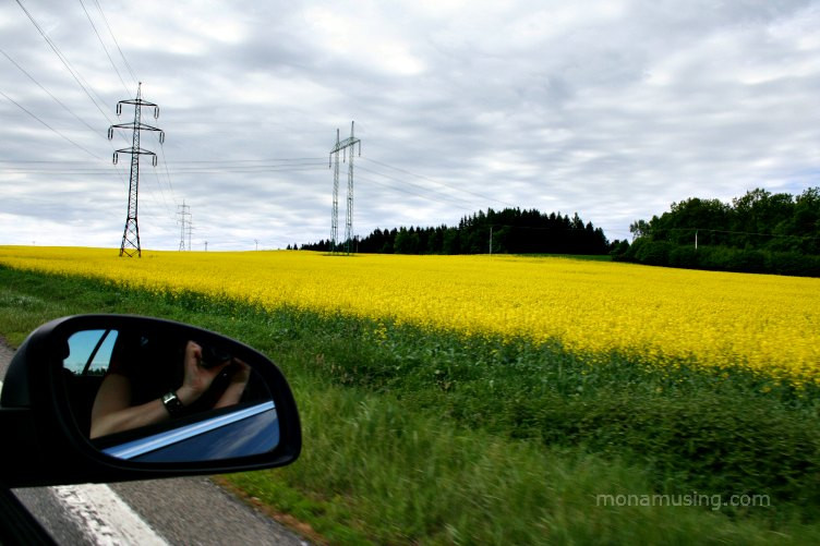 yellow canola field viewed from a car window with the photographer's reflection in the rear view mirror while driving in Central Europe