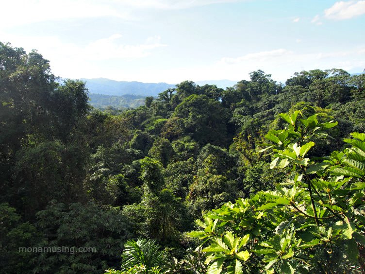 Rainforest canopy in Arenal Costa Rica, viewed on a canopy tour