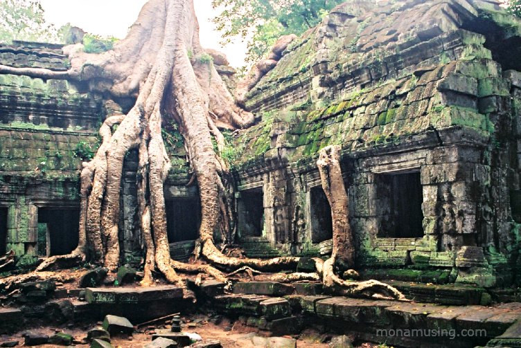 Ta Prohm Temple in Angkor, Cambodia with tree roots growing over it