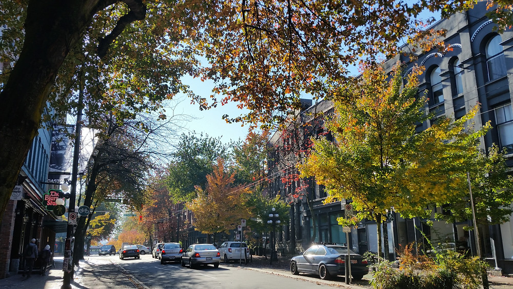 autumn scene on a street with large trees in Vancouver's Gastown neighbourhood