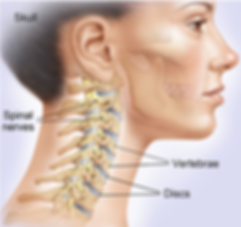Neck Diagram 1.png