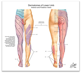 lower leg demations .png
