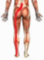 Lower Back and Sciatica Pic 2.png