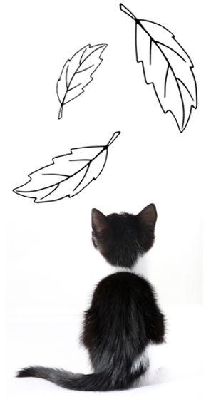 kitten_leaves.jpg