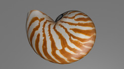 Nautilus2