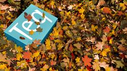 Fall_Scene