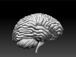 BrainCut2