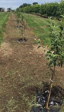 TreeDiaper Arbor Day 2.jpg