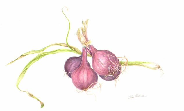 Green and Red Onions