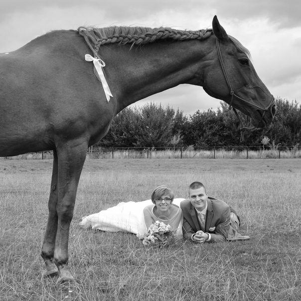 Couple de mariés et leur cheval dans une prairie