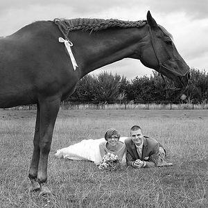 Le cheval et les mariés