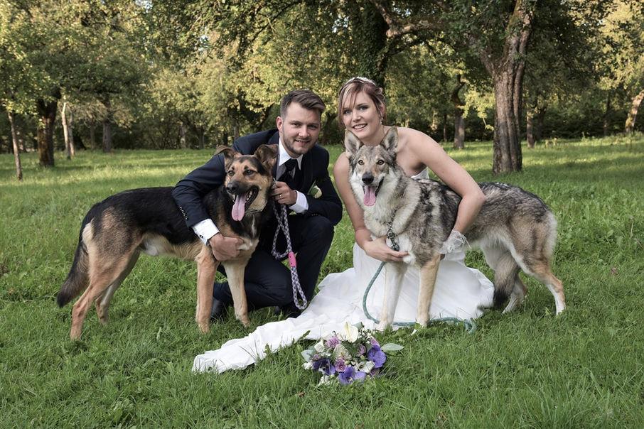 Deux chiens lors du mariage de leurs maîtres