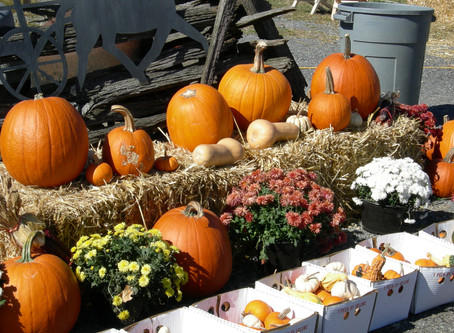 Main Street Toccoa addresses questions about Harvest Festival cancellation