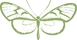 16butterflygreen.png