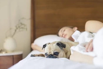 How to Catch More Zzz's... 7 Tips for Better Sleep