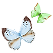 Aquarell-Schmetterling 16