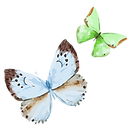 Watercolor Butterfly 16