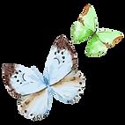Akvarel motýl 16