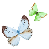 Papillon Aquarelle 16