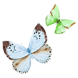 Watercolor Butterfly 16