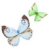Papillon Aquarelle 16