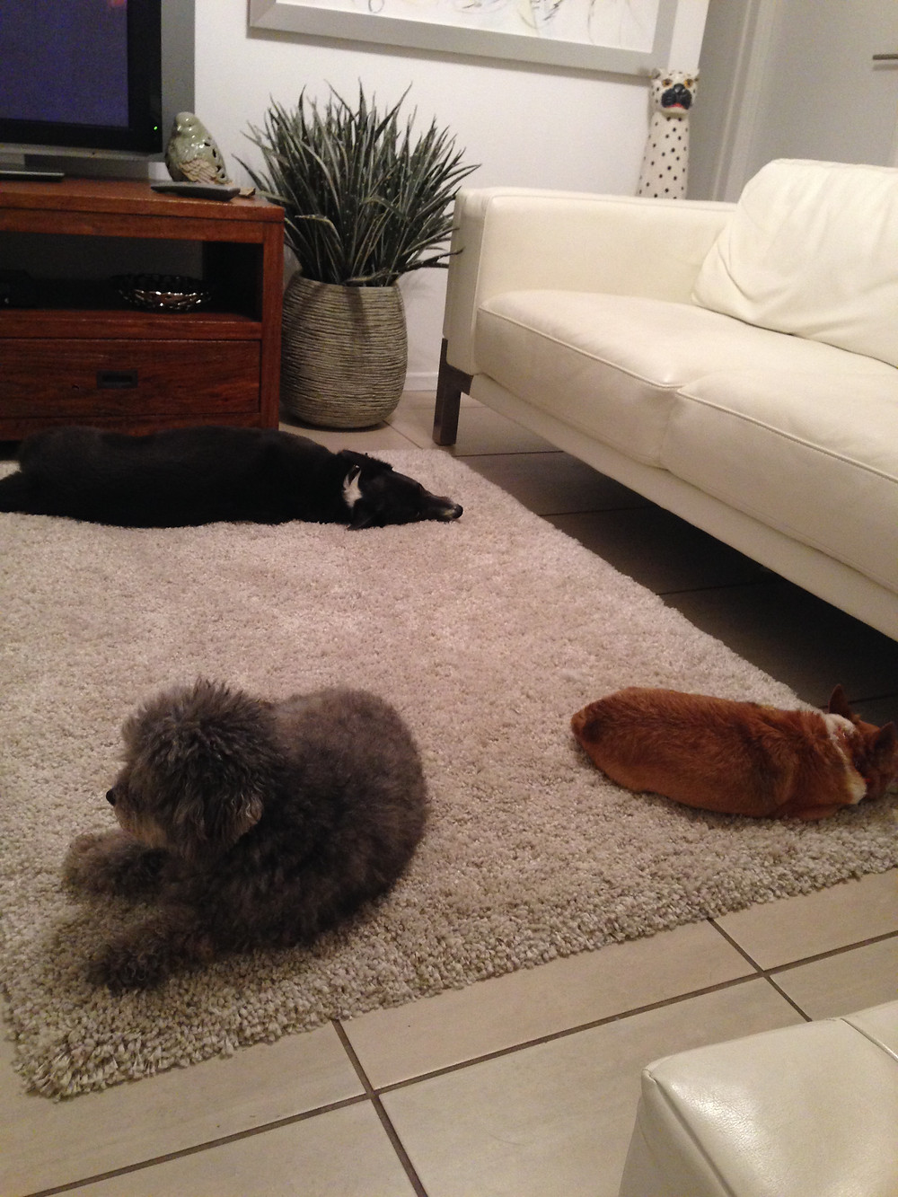 dogs on rug
