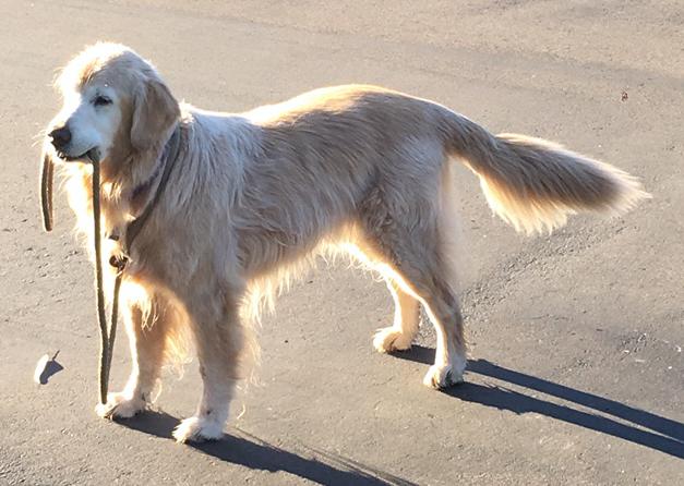 dog with leash on beach