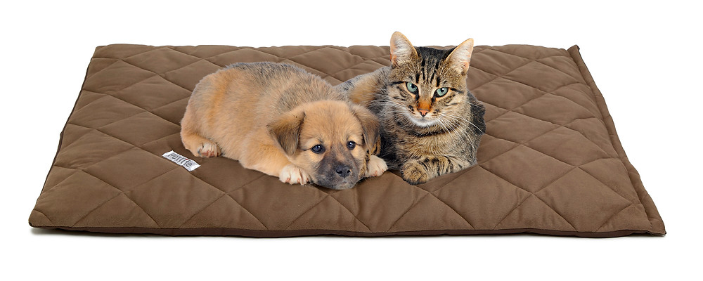 dog and cat on bed- CuddleCarepss