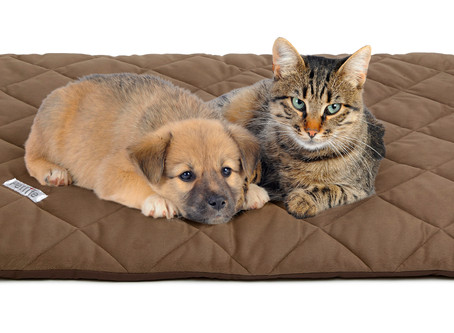 Winter is on its way-  Care for Your Pets when temperatures plummet.