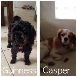 Guinness and Casper