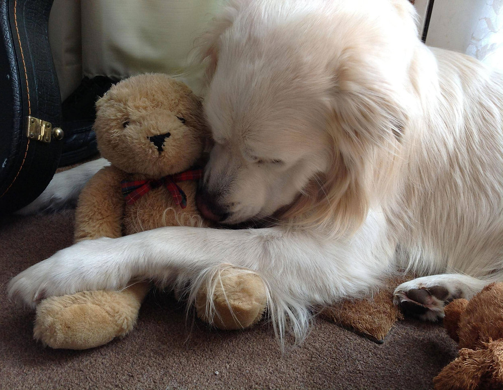 dog with teddy- CuddleCare