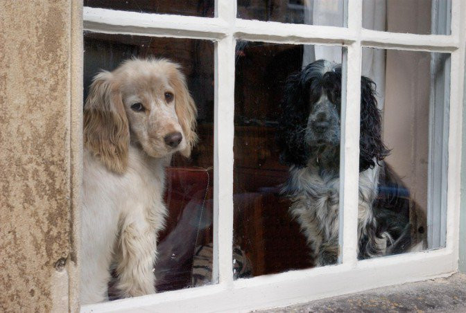 dogs waiting-CuddleCare