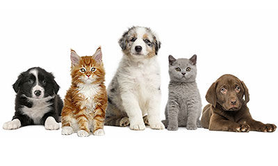 puppies and kittens -contact -CuddleCare PSS
