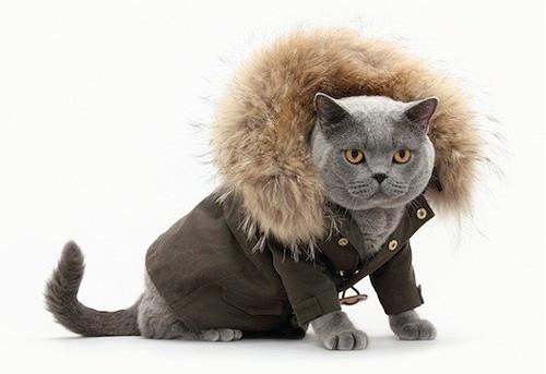 Cat in coat- CuddleCarepss