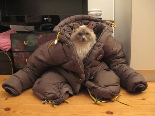 Cat in silly coat-CuddleCarepss