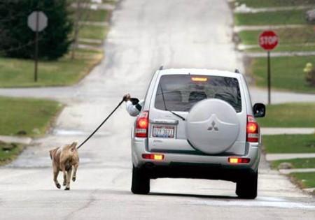 dog running beside car