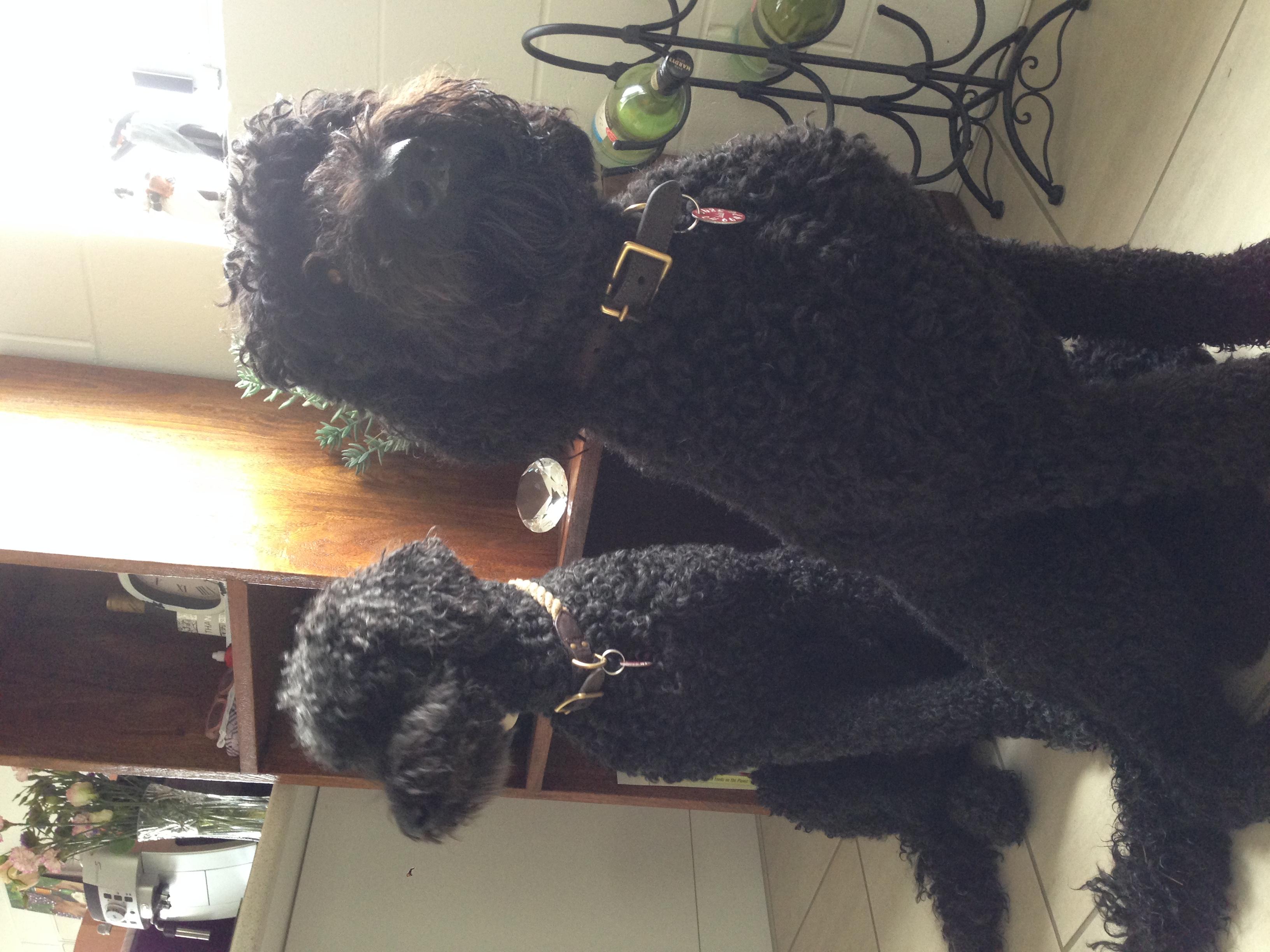Zozo and Lola
