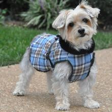 Dog in tartan coat- CuddleCarepss
